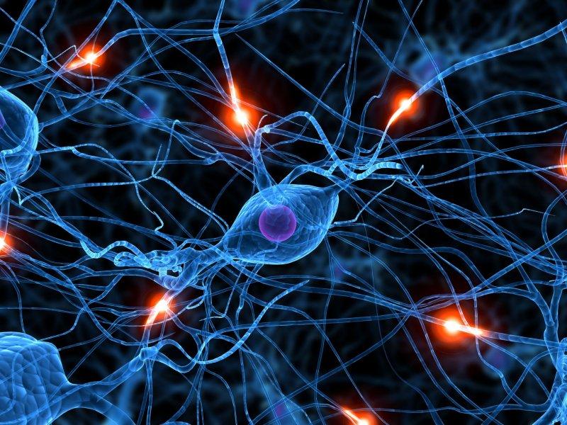 1328965360_neurona
